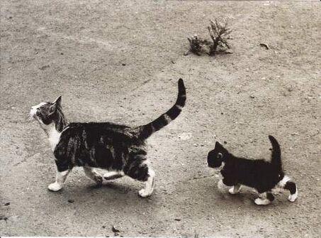Des chats du monde