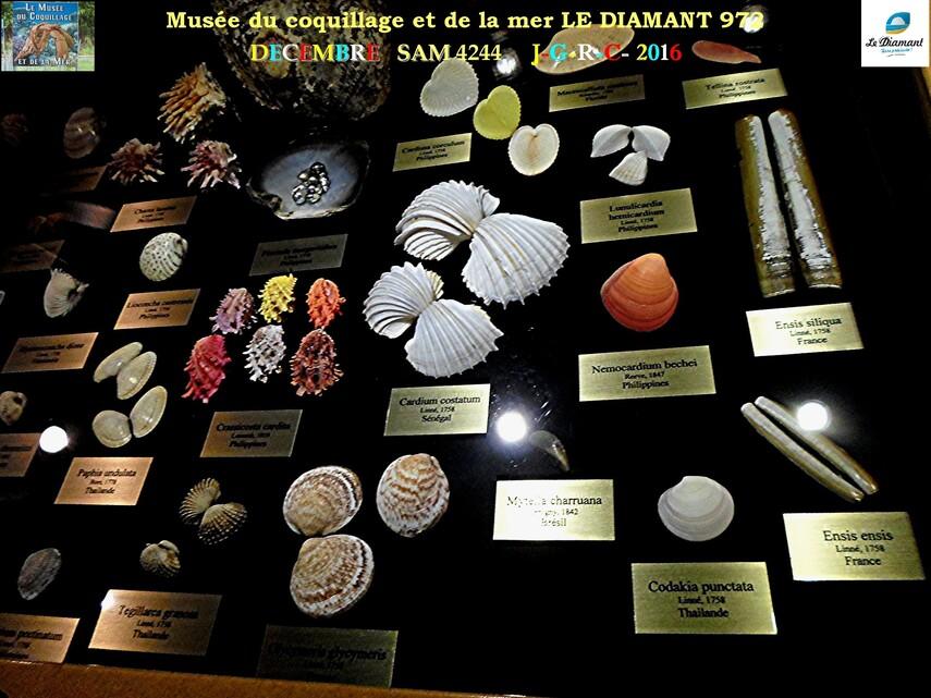 Le monde des coquillages de mer   3/5  18/29    LE DIAMANT MARTINIQUE       D    23/05/2018
