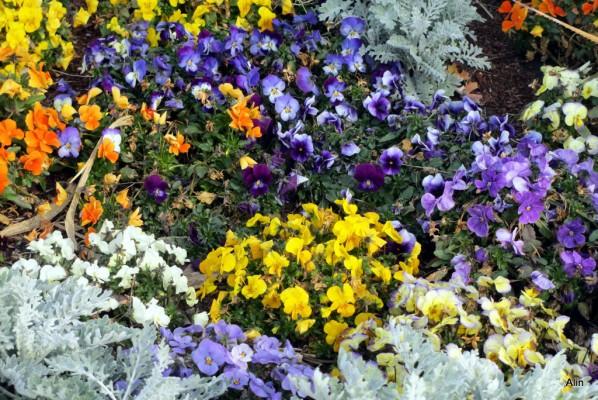 21---fleurs.JPG
