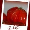 zest2zab