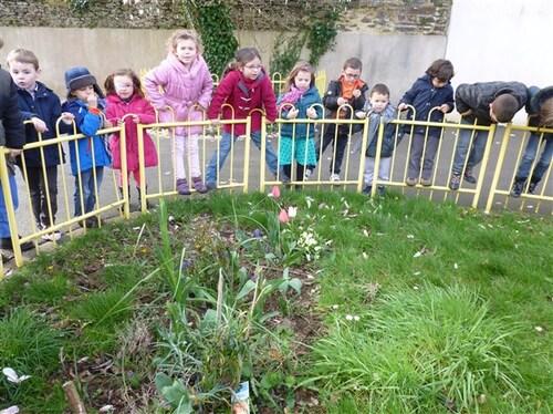 Nos tulipes fleurissent...