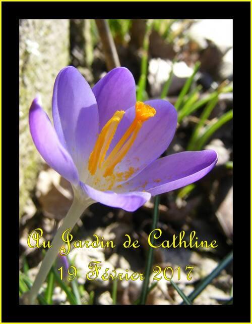 Jardiner avec la lune du 21 au 28 Février