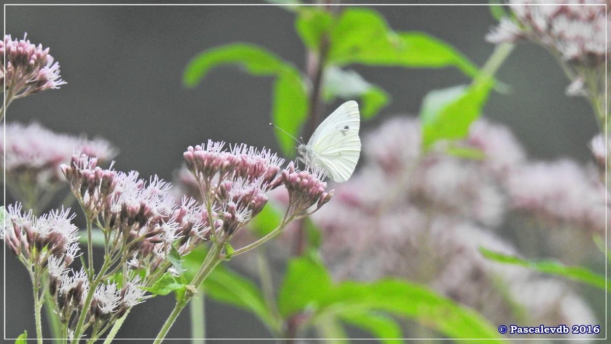 Réserve géologique de Saucats - Août 2016 - 8/10