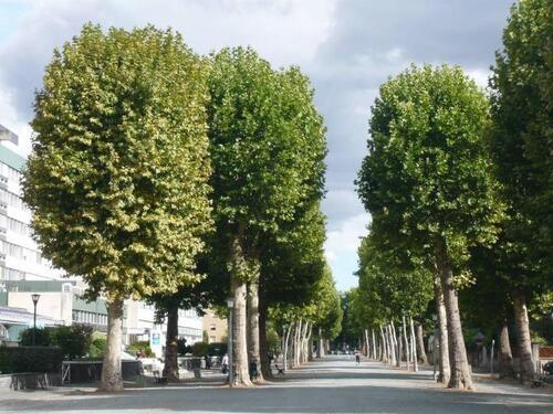 Les arbres...!!!
