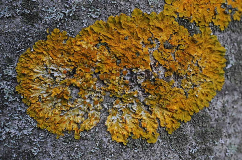 Photos-Sable--lichens--mousse---roches-6392.jpg
