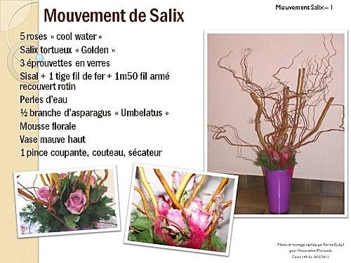 2012 03 20 mouvement salix (1)