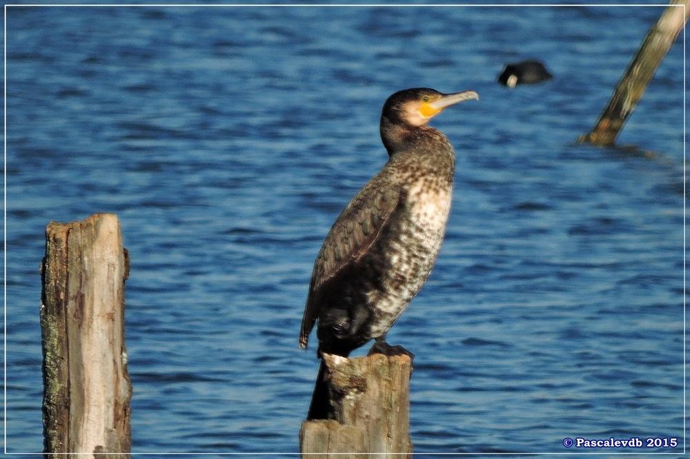 Réserve ornitho du Teich - fin décembre 2015 - 3/6