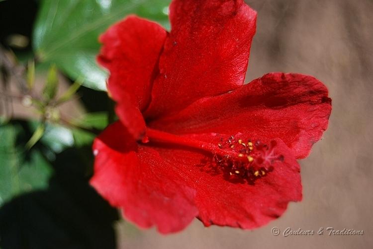 Fleurs éxotiques au Maroc