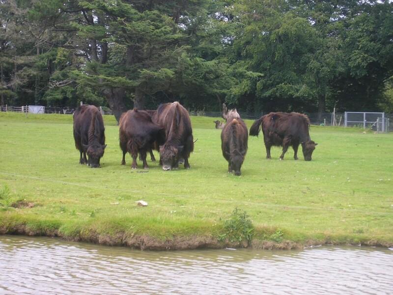 Parc Animalier de Branféré 1