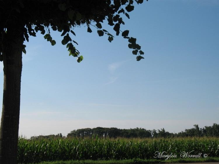 Ciel d'Alsace 279