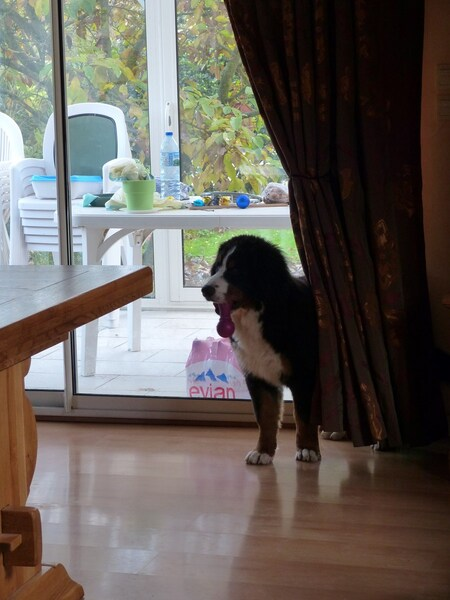 Jasper et Baggy à la maison