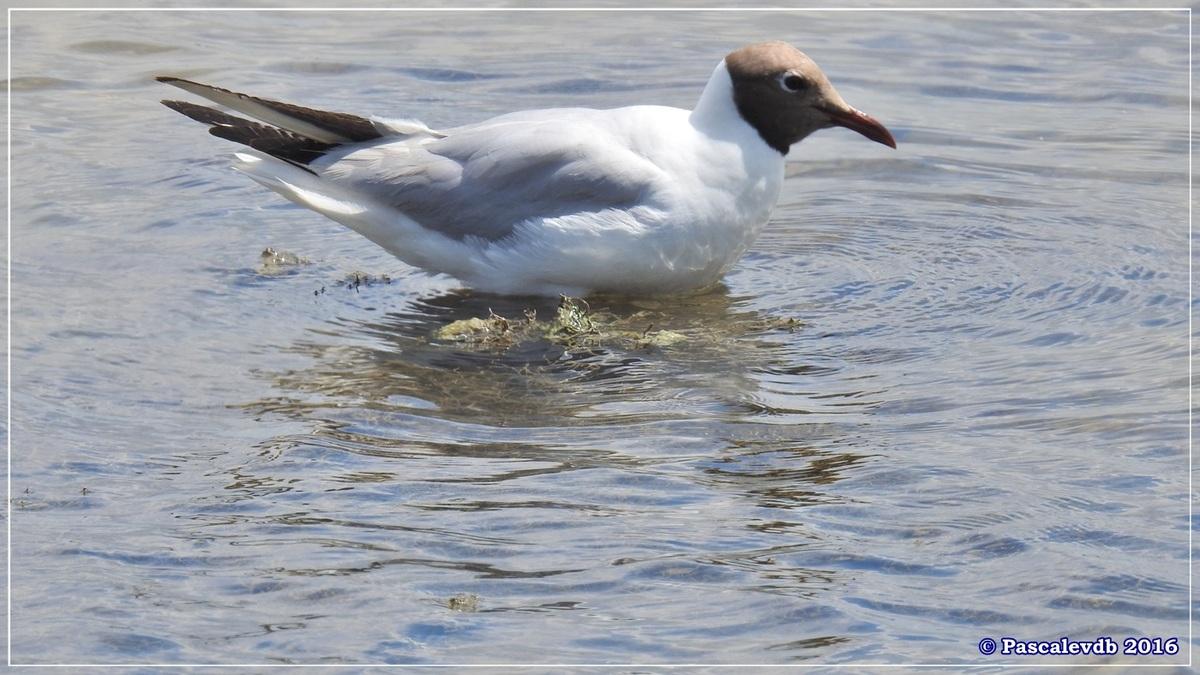 Réserve ornitho du Teich - Juin 2016 - 3/12
