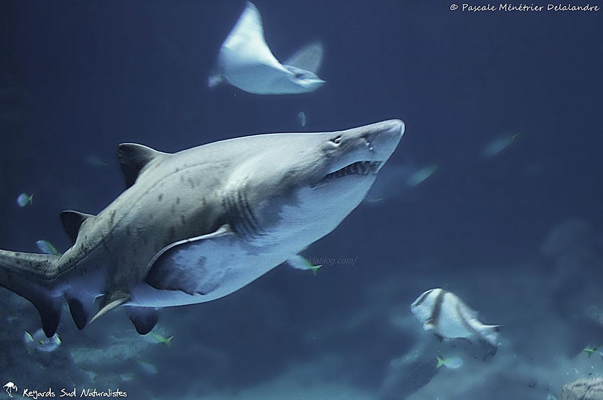 Moi qui ai la phobie des requins, rien que de revoir ces photos, je frissonne !