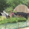 Nouakchott Jardin D'olivia