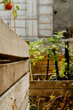 A jardinage collectif, récolte bien plus savoureuse