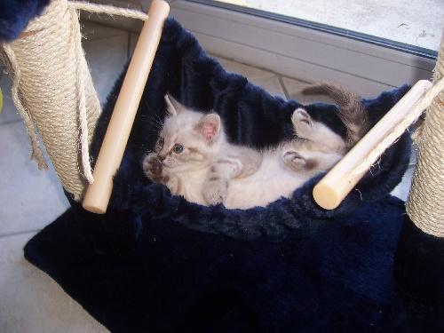 Le chat de Lolotte43