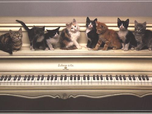 10 raisons d'aimer les chats .