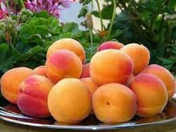 >3JUIN-6JUIN Abricots Urgent