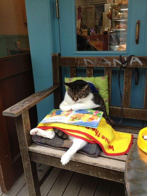 Moi, je suis bien installé sur ma Chaise-Longue Antique, j'ai consulté le programma, et je suis pret pour mes séries Télé ! (Reading is FUNdamental)