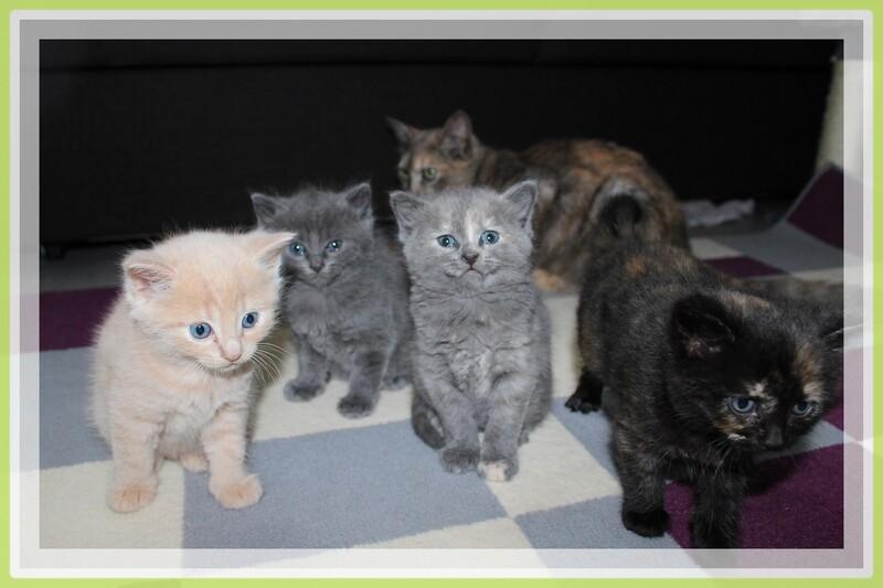 12 JUILLET 2014, les chatons ont eu 1 mois