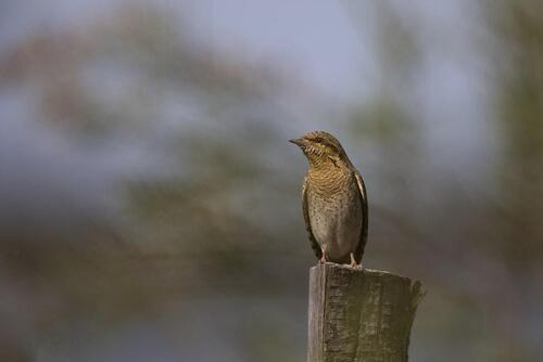 Inventaire ornithologique Camargue Avril 2017