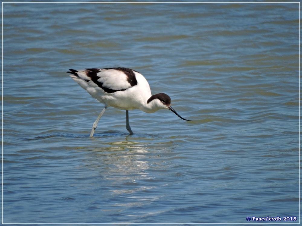 Printemps 2015 à la réserve ornitho du Teich - 3/13