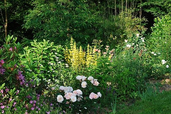 jardin-en-juin.jpg
