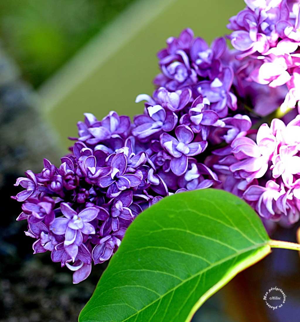 Mon jardin (1)