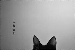 ♔Chat.