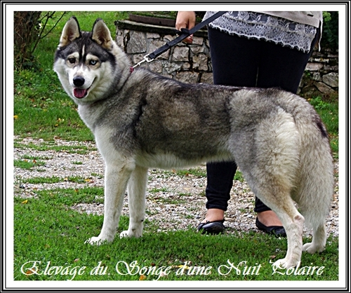 Isis (2,5 ans)