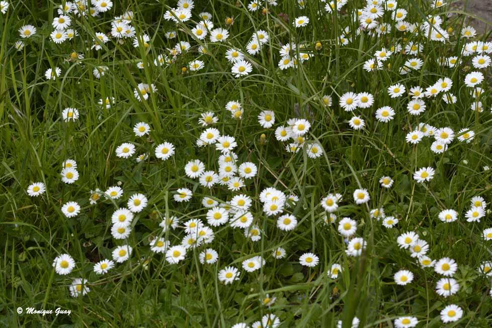 Panel de fleurs des champs