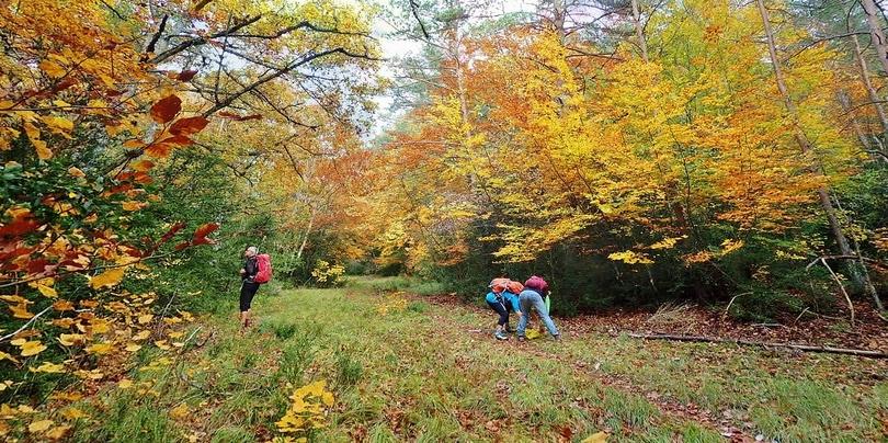 Les gorges en écharpe d'automne
