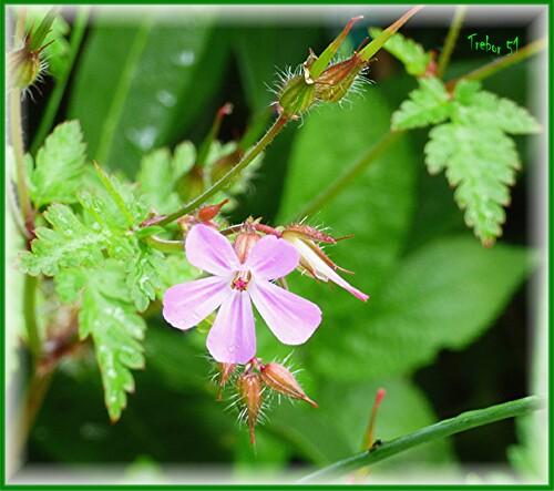 Apres les insectes....les fleurs....