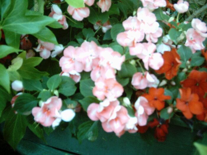 dans mon jardin