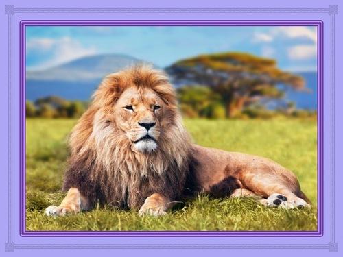 A la poursuite de votre lion (1 à 3)