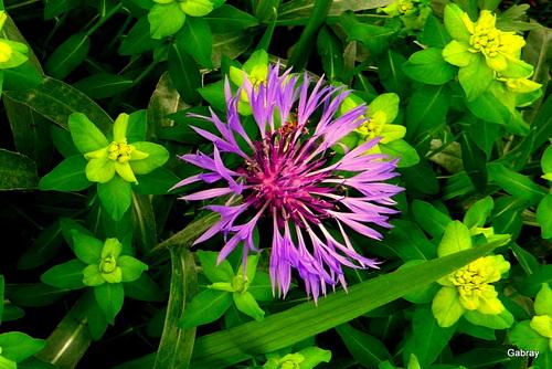 Les fleurs de mon jardin en mai!