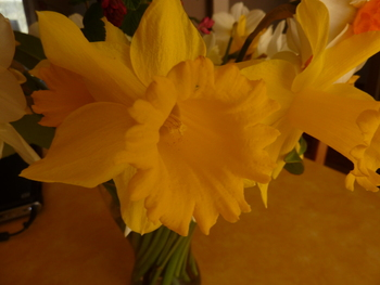 Fleurs de Printemps 2013