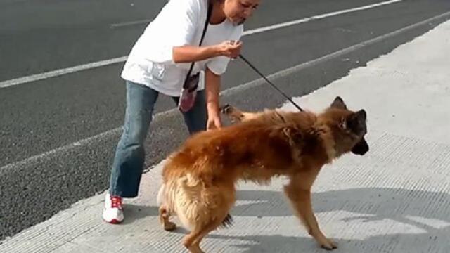 Elle a retraversé l'autoroute avec le chien