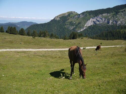 Les chevaux cohabitent