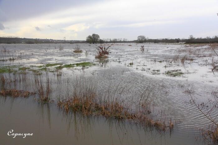 Loire 1392
