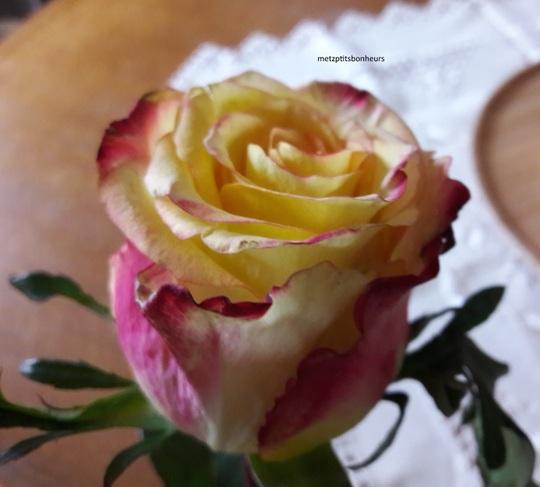 Opération : Une rose...