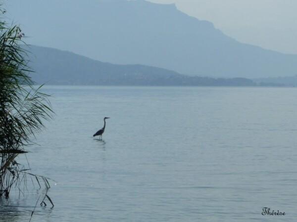 Lac du Bourget (20)