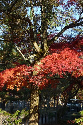 Haîku d'automne