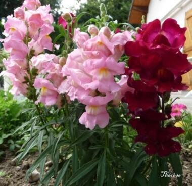 Fleurs d'automne (38)