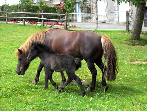 Ponette et son fils