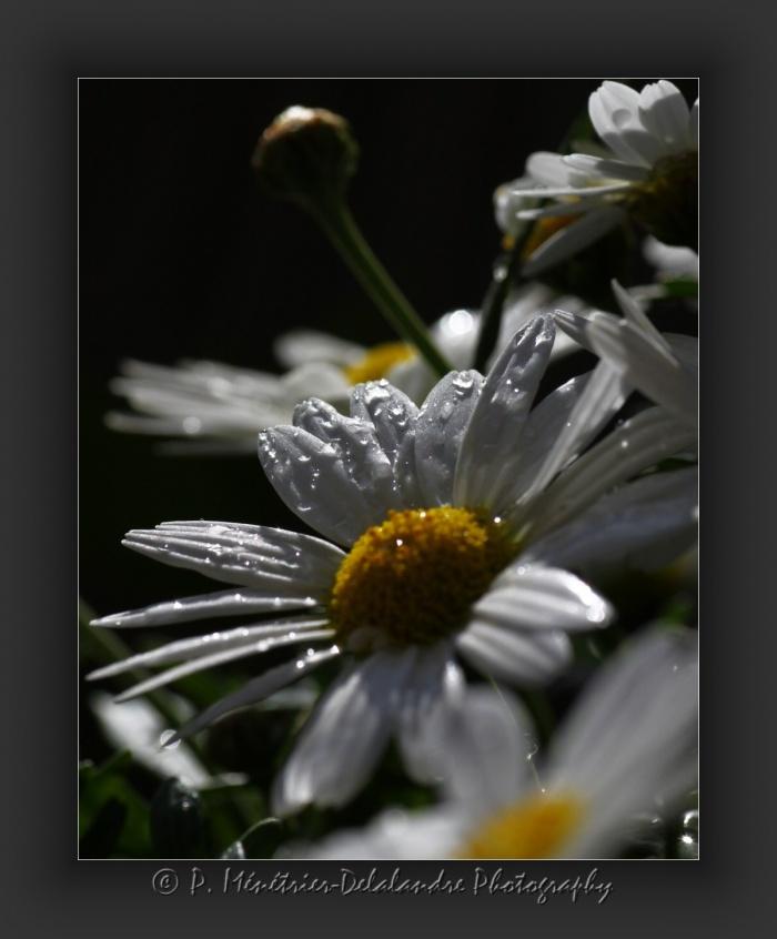 Traces de pluie...