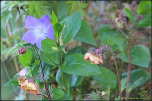 Promesse de belles fleurs...