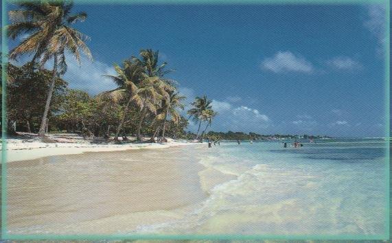 saint françois ,les raisins clairs Guadeloupe 001