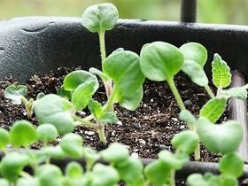 Des nouvelles des semis