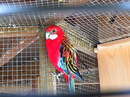 les-oiseaux-et-autres-volatiles-0125.JPG